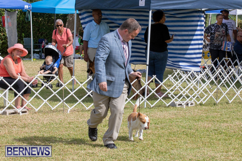 Devils-Isle-All-Breed-Clubs-Bermuda-International-Championship-Dog-Show-October-20-2018-8087