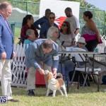 Devil's Isle All Breed Club's Bermuda International Championship Dog Show, October 20 2018-8091