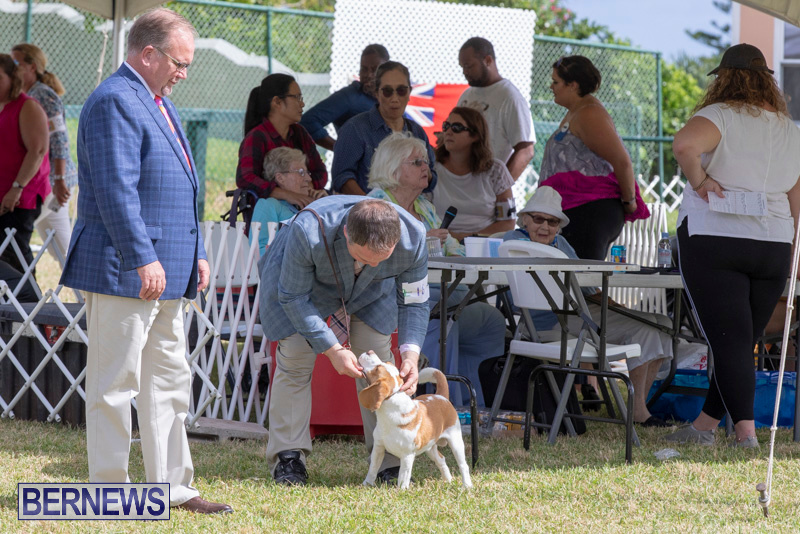 Devils-Isle-All-Breed-Clubs-Bermuda-International-Championship-Dog-Show-October-20-2018-8091