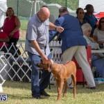 Devil's Isle All Breed Club's Bermuda International Championship Dog Show, October 20 2018-8098