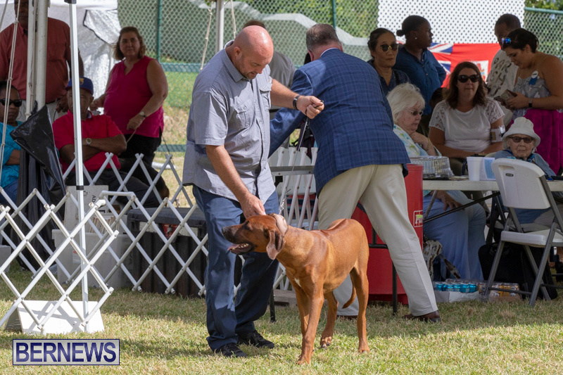 Devils-Isle-All-Breed-Clubs-Bermuda-International-Championship-Dog-Show-October-20-2018-8098