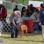 Devil's Isle All Breed Club's Bermuda International Championship Dog Show, October 20 2018-8101
