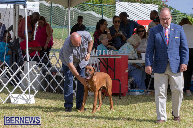 Devils-Isle-All-Breed-Clubs-Bermuda-International-Championship-Dog-Show-October-20-2018-8101