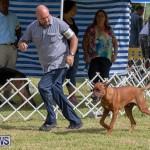 Devil's Isle All Breed Club's Bermuda International Championship Dog Show, October 20 2018-8103