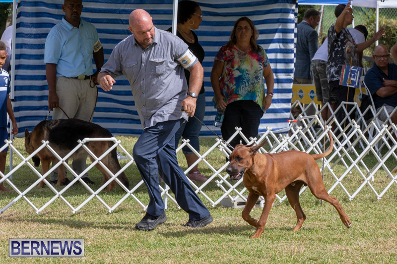 Devils-Isle-All-Breed-Clubs-Bermuda-International-Championship-Dog-Show-October-20-2018-8103