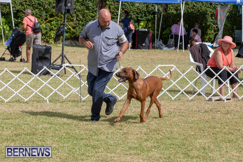 Devils-Isle-All-Breed-Clubs-Bermuda-International-Championship-Dog-Show-October-20-2018-8105