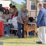 Devil's Isle All Breed Club's Bermuda International Championship Dog Show, October 20 2018-8108