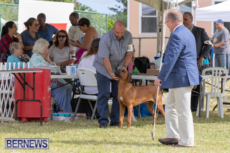Devils-Isle-All-Breed-Clubs-Bermuda-International-Championship-Dog-Show-October-20-2018-8108