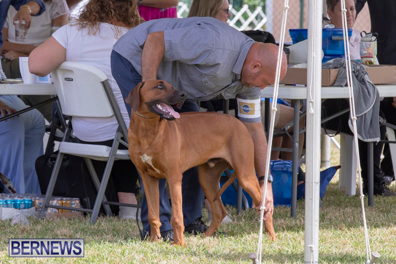 Devils-Isle-All-Breed-Clubs-Bermuda-International-Championship-Dog-Show-October-20-2018-8110