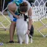 Devil's Isle All Breed Club's Bermuda International Championship Dog Show, October 20 2018-8134