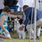 Devil's Isle All Breed Club's Bermuda International Championship Dog Show, October 20 2018-8140