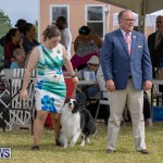 Devil's Isle All Breed Club's Bermuda International Championship Dog Show, October 20 2018-8147