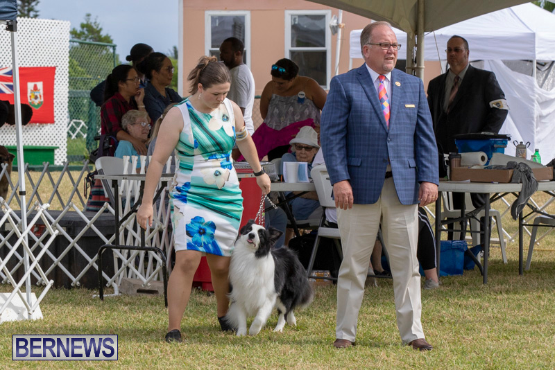 Devils-Isle-All-Breed-Clubs-Bermuda-International-Championship-Dog-Show-October-20-2018-8147