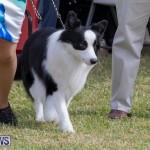 Devil's Isle All Breed Club's Bermuda International Championship Dog Show, October 20 2018-8149