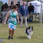 Devil's Isle All Breed Club's Bermuda International Championship Dog Show, October 20 2018-8152
