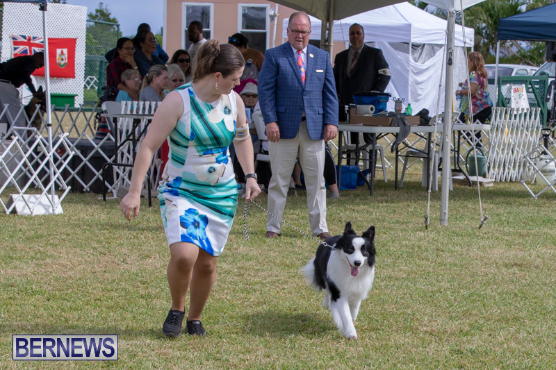 Devils-Isle-All-Breed-Clubs-Bermuda-International-Championship-Dog-Show-October-20-2018-8152