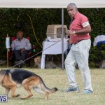 Devil's Isle All Breed Club's Bermuda International Championship Dog Show, October 20 2018-8161