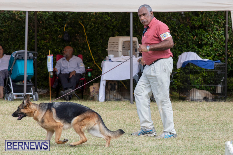 Devils-Isle-All-Breed-Clubs-Bermuda-International-Championship-Dog-Show-October-20-2018-8161