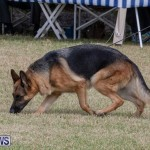 Devil's Isle All Breed Club's Bermuda International Championship Dog Show, October 20 2018-8163