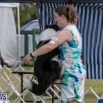 Devil's Isle All Breed Club's Bermuda International Championship Dog Show, October 20 2018-8164