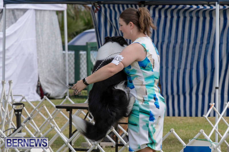 Devils-Isle-All-Breed-Clubs-Bermuda-International-Championship-Dog-Show-October-20-2018-8164