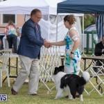 Devil's Isle All Breed Club's Bermuda International Championship Dog Show, October 20 2018-8168