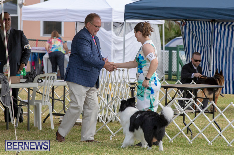 Devils-Isle-All-Breed-Clubs-Bermuda-International-Championship-Dog-Show-October-20-2018-8168