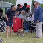Devil's Isle All Breed Club's Bermuda International Championship Dog Show, October 20 2018-8171
