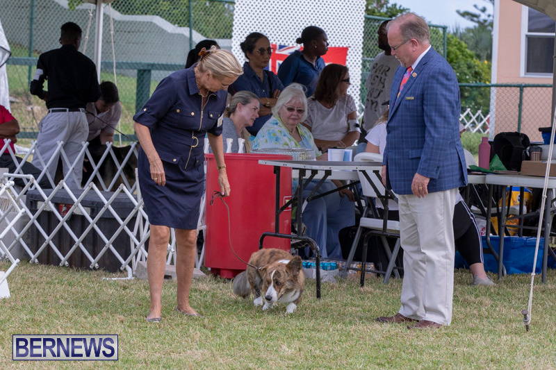 Devils-Isle-All-Breed-Clubs-Bermuda-International-Championship-Dog-Show-October-20-2018-8171