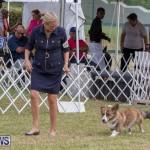 Devil's Isle All Breed Club's Bermuda International Championship Dog Show, October 20 2018-8174