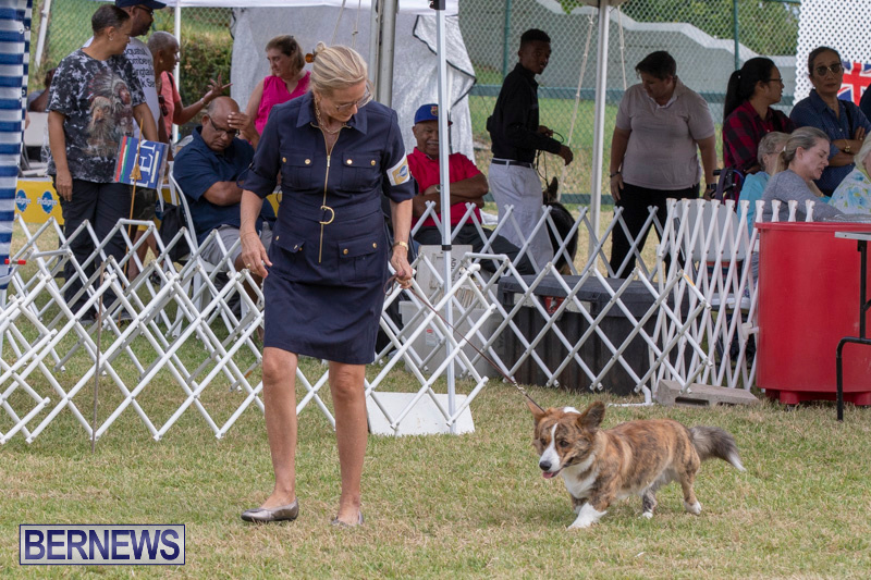 Devils-Isle-All-Breed-Clubs-Bermuda-International-Championship-Dog-Show-October-20-2018-8174
