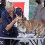 Devil's Isle All Breed Club's Bermuda International Championship Dog Show, October 20 2018-8185