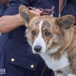 Devil's Isle All Breed Club's Bermuda International Championship Dog Show, October 20 2018-8186