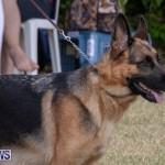 Devil's Isle All Breed Club's Bermuda International Championship Dog Show, October 20 2018-8193