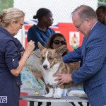 Devil's Isle All Breed Club's Bermuda International Championship Dog Show, October 20 2018-8195