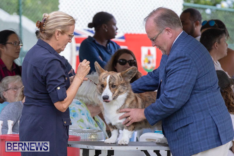 Devils-Isle-All-Breed-Clubs-Bermuda-International-Championship-Dog-Show-October-20-2018-8195