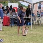 Devil's Isle All Breed Club's Bermuda International Championship Dog Show, October 20 2018-8210