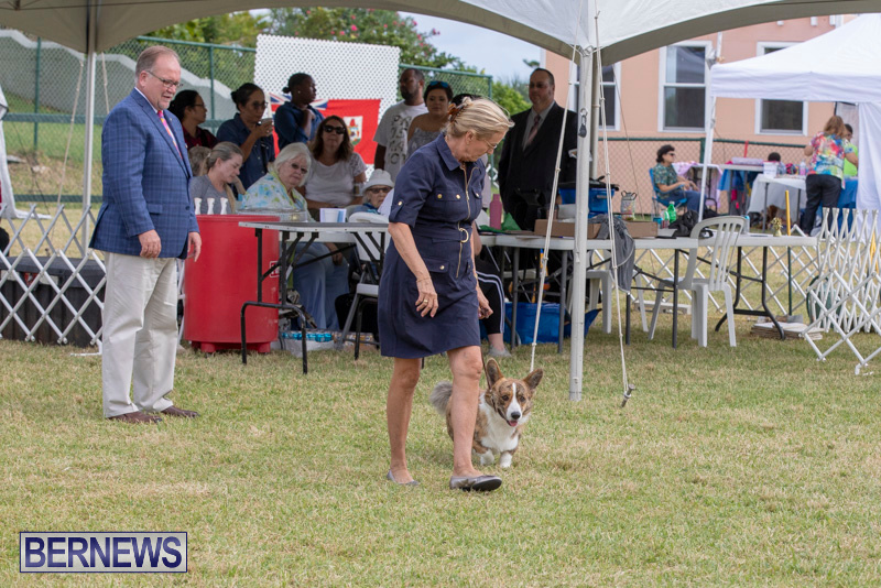 Devils-Isle-All-Breed-Clubs-Bermuda-International-Championship-Dog-Show-October-20-2018-8210