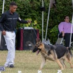 Devil's Isle All Breed Club's Bermuda International Championship Dog Show, October 20 2018-8225