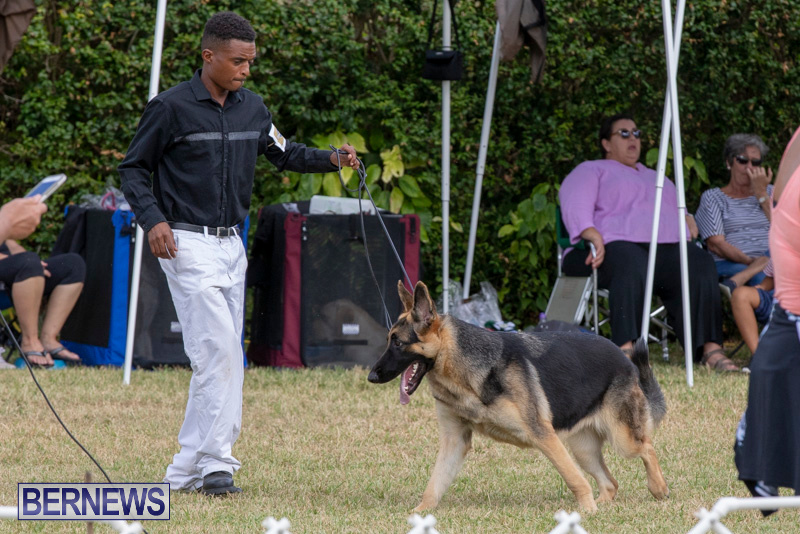 Devils-Isle-All-Breed-Clubs-Bermuda-International-Championship-Dog-Show-October-20-2018-8225