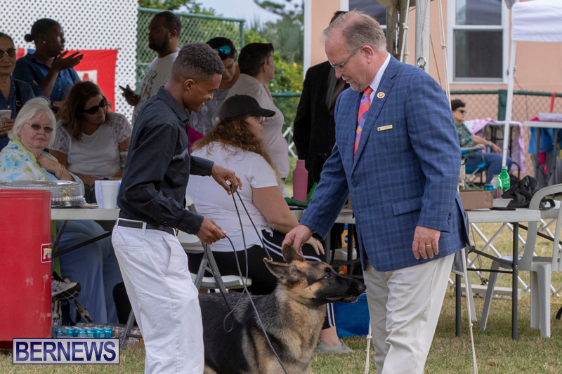 Devils-Isle-All-Breed-Clubs-Bermuda-International-Championship-Dog-Show-October-20-2018-8229