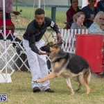 Devil's Isle All Breed Club's Bermuda International Championship Dog Show, October 20 2018-8231