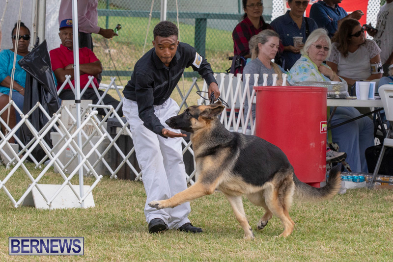 Devils-Isle-All-Breed-Clubs-Bermuda-International-Championship-Dog-Show-October-20-2018-8231