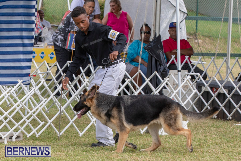 Devils-Isle-All-Breed-Clubs-Bermuda-International-Championship-Dog-Show-October-20-2018-8233