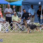 Devil's Isle All Breed Club's Bermuda International Championship Dog Show, October 20 2018-8234