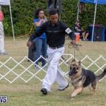 Devil's Isle All Breed Club's Bermuda International Championship Dog Show, October 20 2018-8236