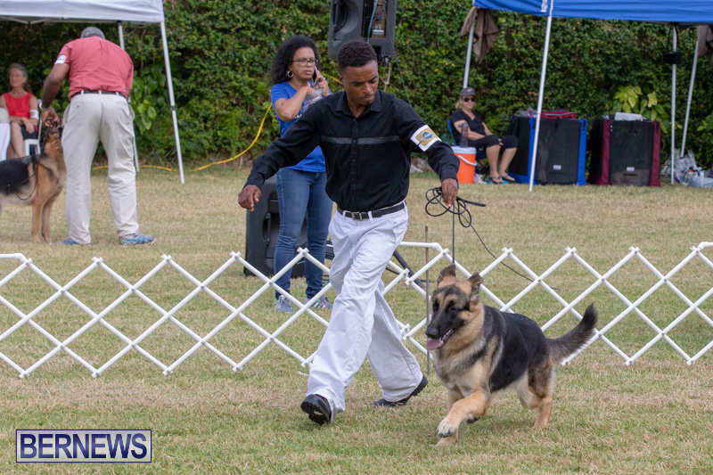 Devils-Isle-All-Breed-Clubs-Bermuda-International-Championship-Dog-Show-October-20-2018-8236