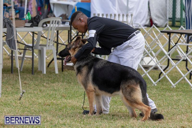 Devils-Isle-All-Breed-Clubs-Bermuda-International-Championship-Dog-Show-October-20-2018-8251