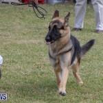Devil's Isle All Breed Club's Bermuda International Championship Dog Show, October 20 2018-8259