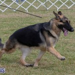 Devil's Isle All Breed Club's Bermuda International Championship Dog Show, October 20 2018-8271